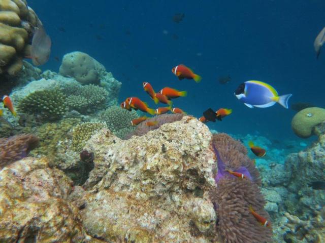 Quelques photos de mes dernières vacances (Maldives) 890162IMG2753