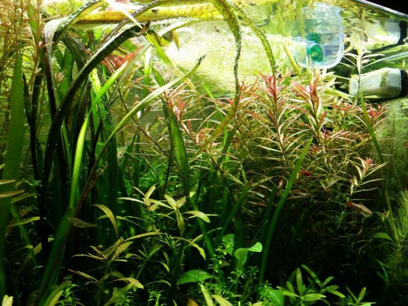 Mes (plus) de 60 plantes dans mon 240 litres - Page 5 89229320141104192400