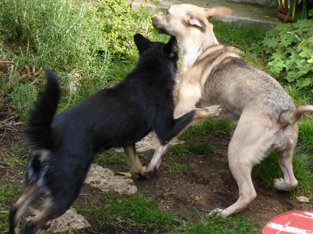 > Mika, un amour de petite chienne, née en mai 2011 - Adoptée 893994P1000076