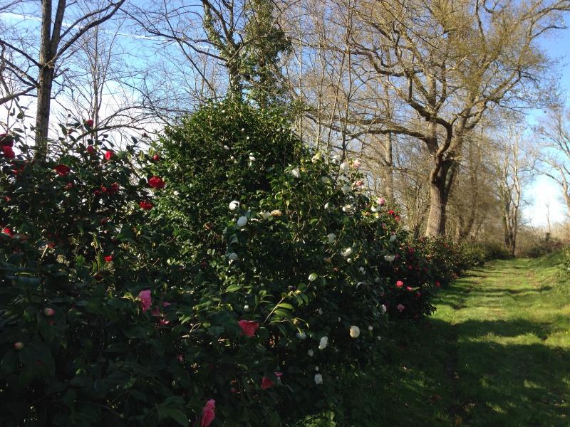 (40) Plantarium et chemin de ronde - Gaujacq 895311IMG0493