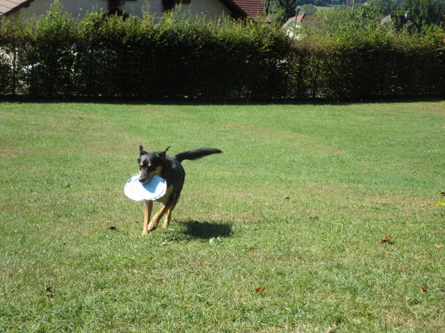 Kami, chien de randonnée - Page 21 903217IMG4823