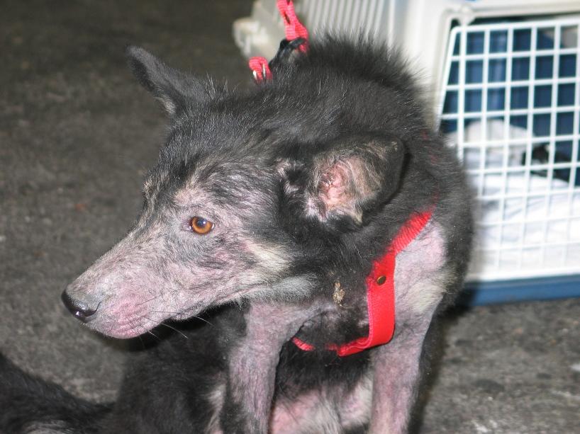 > Mika, un amour de petite chienne, née en mai 2011 - Adoptée 908585496