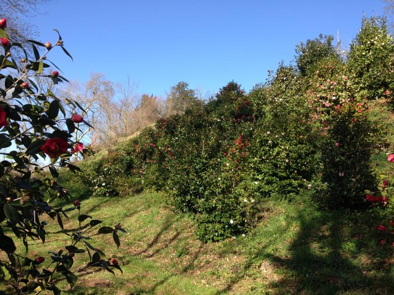 (40) Plantarium et chemin de ronde - Gaujacq 915097IMG0505