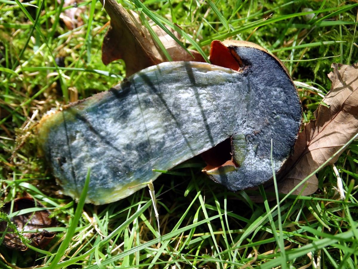 [fil ouvert] les champignons 923908027Copier