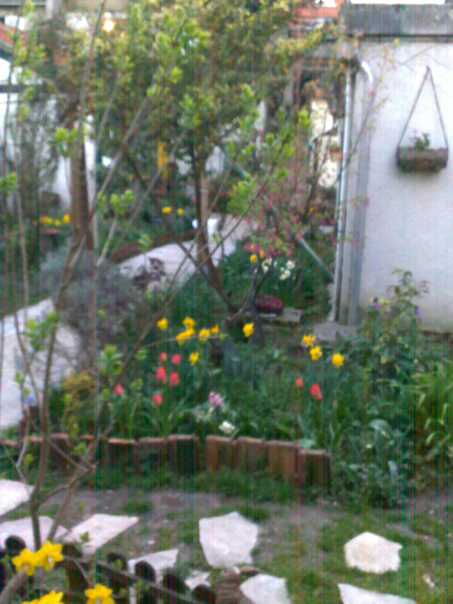 quelques photos de mon jardin 92479714042013137