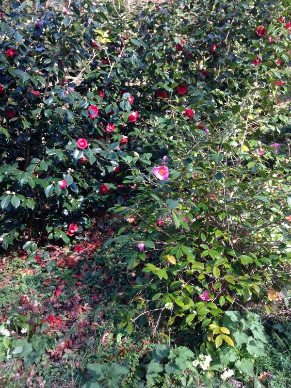 (40) Plantarium et chemin de ronde - Gaujacq 926326IMG0520