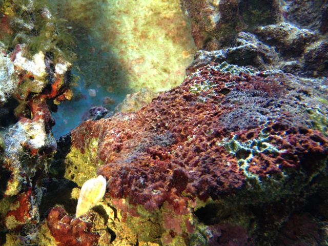 probleme osmoseur aquariopur? 935717photo22