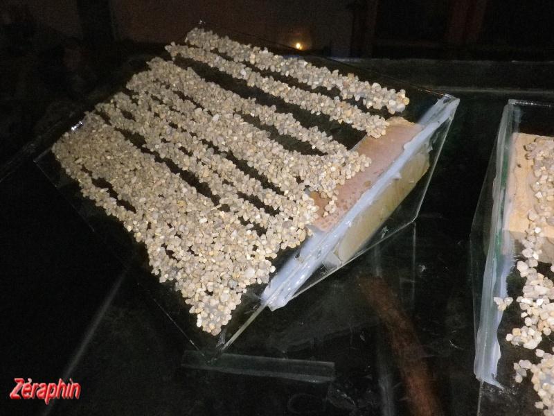 Aménagement d'un aqua-terrarium pour espèce semi-aquatique 93577304janvier20129