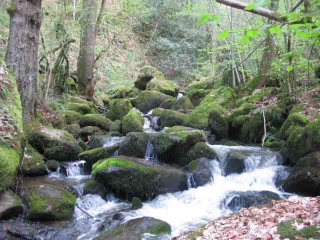 Ruisseau du Mayroux 939316IMG_5087