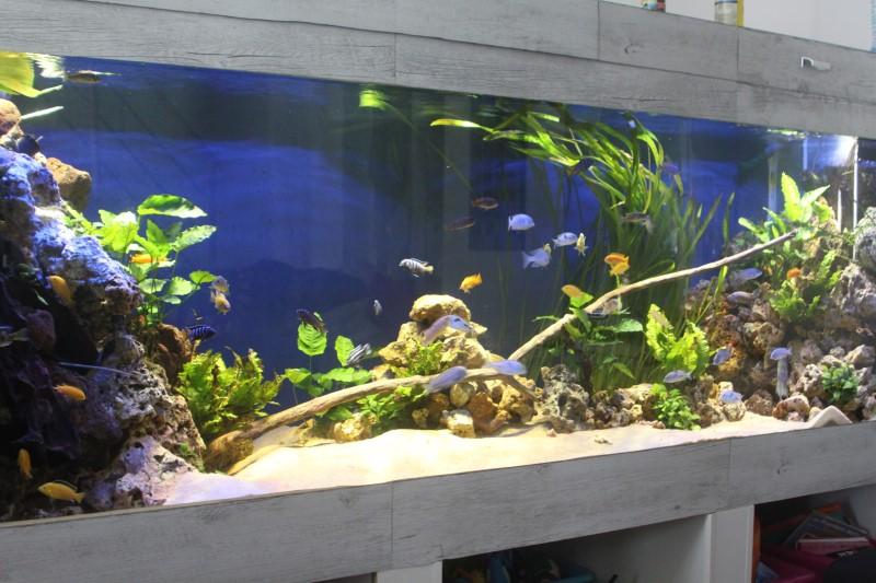 aquarium de 2000L en bois - Page 2 942894IMG0005
