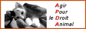 BOXES POUR LE REFUGE DE LENUTA - ENCORE 40 CHIENS SANS ABRIS - Page 4 945932banapdav04