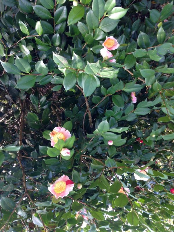 (40) Plantarium et chemin de ronde - Gaujacq 946645IMG0528