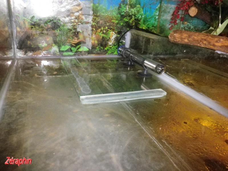 Aménagement d'un aqua-terrarium pour espèce semi-aquatique 94686904janvier201211