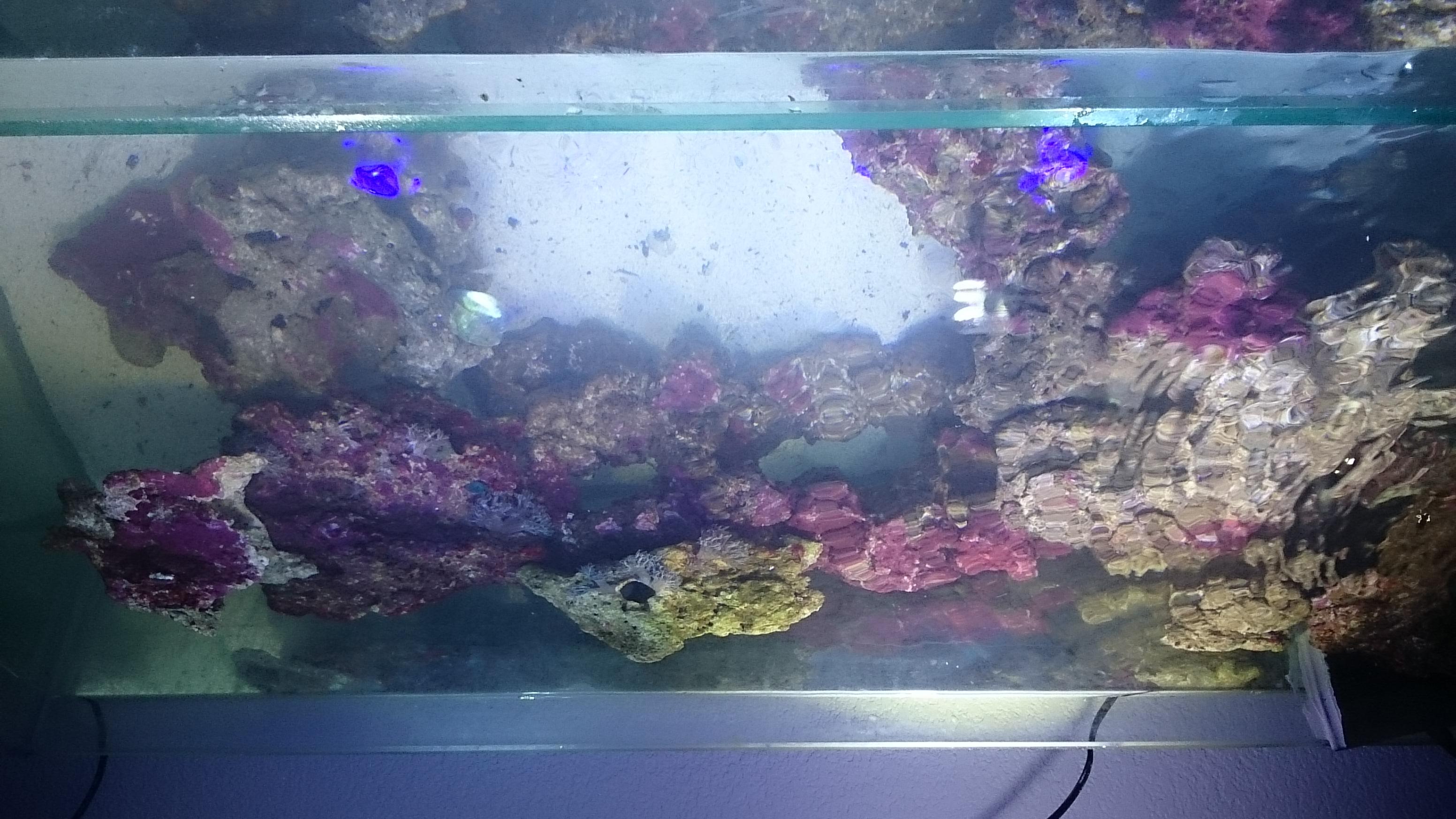 Le mini reef de axelou mon petit garçon  948952DSC0777