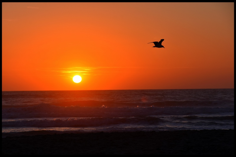 Coucher de Soleil océan Cap Ferret 952202DSC4351