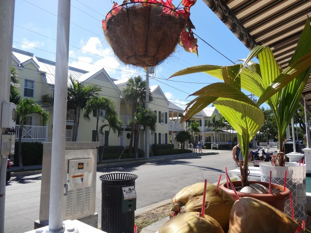 First Visit WDW/Miami/Key West halloween 2013 - Page 7 952920DSC04193
