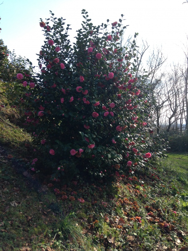 (40) Plantarium et chemin de ronde - Gaujacq 957690IMG0523