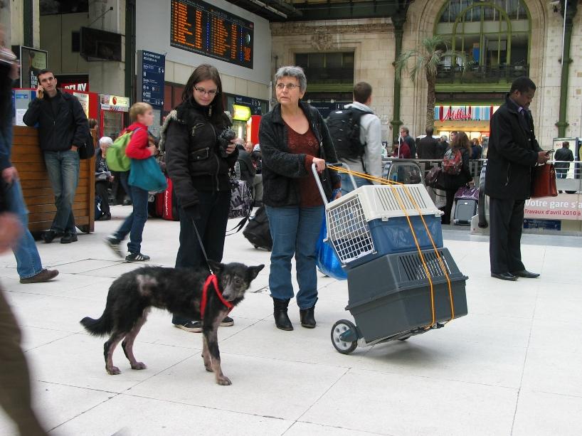 > Mika, un amour de petite chienne, née en mai 2011 - Adoptée 9588961111