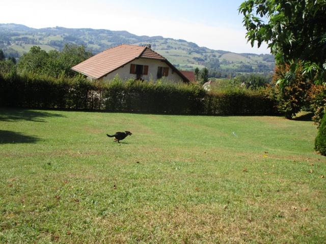 Kami, chien de randonnée - Page 21 961386IMG4824