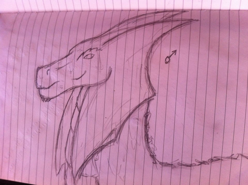 RainForest Dragon, male and female gender 9642131062354102034864860264931674923252n