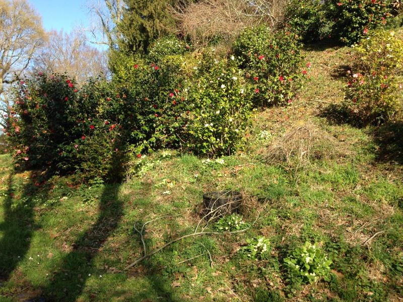 (40) Plantarium et chemin de ronde - Gaujacq 964758IMG0519
