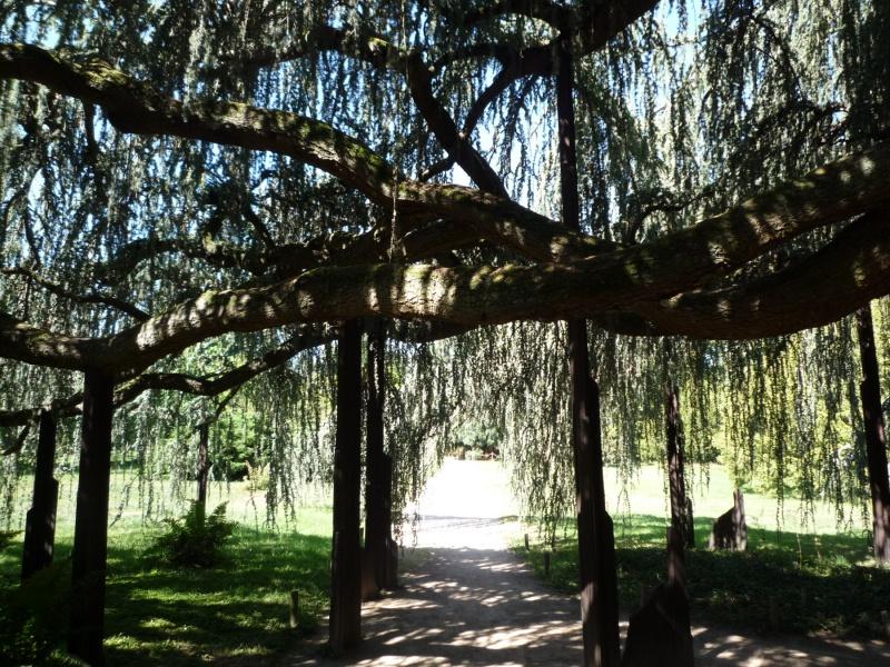 arboretum 966181P1070862