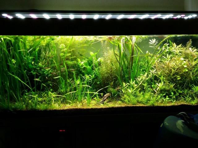 Mes (plus) de 60 plantes dans mon 240 litres - Page 5 97644220140921062829