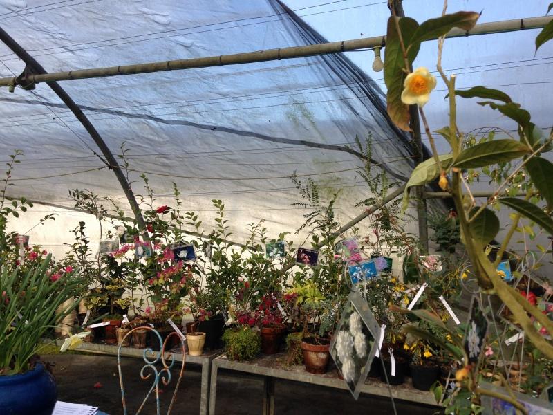 (40) Plantarium et chemin de ronde - Gaujacq 981899IMG0537