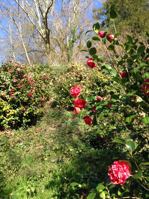 (40) Plantarium et chemin de ronde - Gaujacq 983730IMG0500