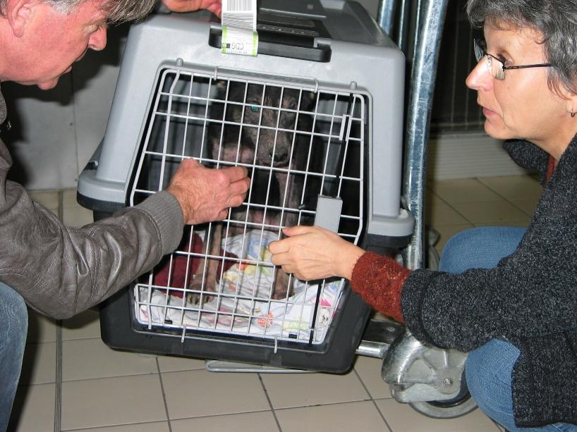 > Mika, un amour de petite chienne, née en mai 2011 - Adoptée 992064142