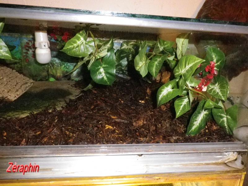 Aménagement d'un aqua-terrarium pour espèce semi-aquatique 99674104janvier201217