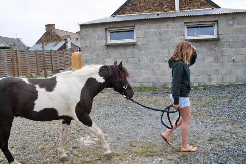LOONY -  ONC poney né en 2001 - Adopté en juin 2011 par Carole 998813Looetsanouvellefamille