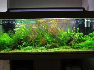 200l planté Mini_147085IMG1305