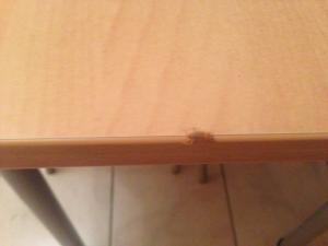 Quel est cet insecte Mini_172278IMG0053