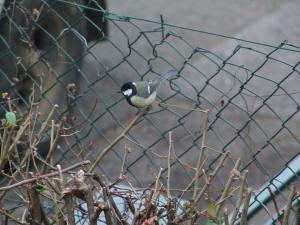 Les oiseaux de nos jardins Mini_174994DSCF2451JPG