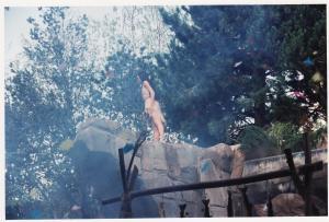 Vos vieilles photos du Resort - Page 15 Mini_329908SP5