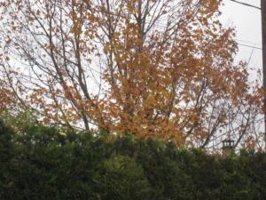 Thème du mois de Novembre : Les couleurs de l'Automne Mini_382255Photo007jpg