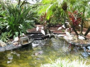 Busch gardens Mini_58099756481163818293305481861n