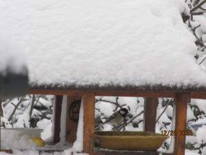 retour de la neige . Mini_600928004