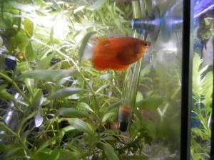 Mise en eau d'un aquarium 146 litres Mini_7442055603