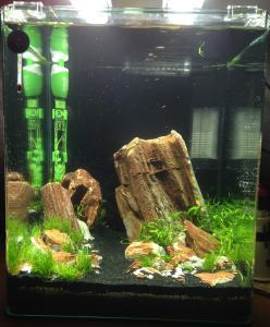 aquarium de 2000L en bois Mini_760188photo2