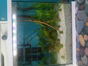 Aide pour organiser mes plantes Mini_80338420170806170128
