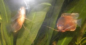 Mise en eau d'un aquarium 146 litres Mini_8070323307