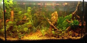 aquarium de 2000L en bois Mini_979611photo4