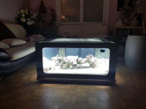 Mon aquarium de Toulouse. 360L Table basse Mini_98732720170412040855