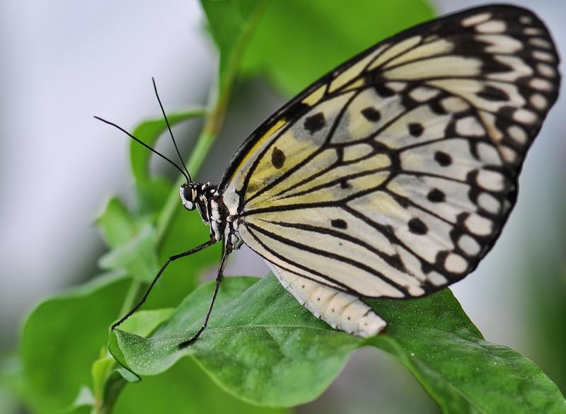 Sortie photo aux jardins des Papillons à Grevenmacher (L) 04 AVRIL 2009 - Les photos 131806COE_4222_belux