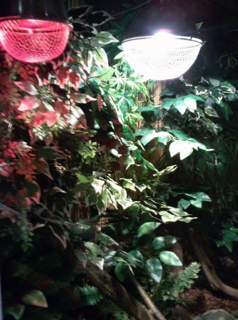 salle de reptiles 134267Terrariume_dragon_d__eau__15_