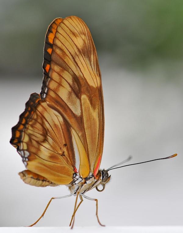Sortie photo aux jardins des Papillons à Grevenmacher (L) 04 AVRIL 2009 - Les photos 139267COE_4265belux