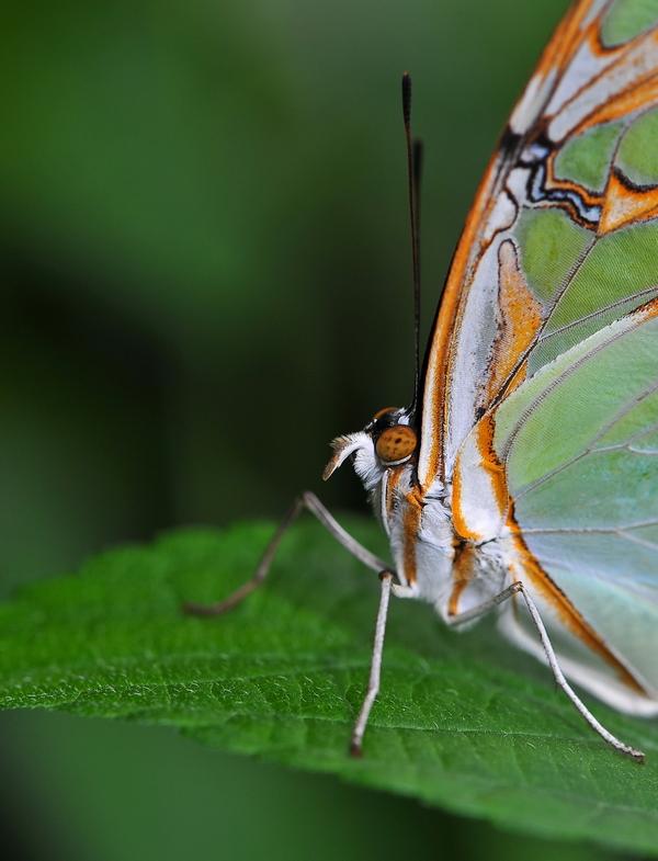 Sortie photo aux jardins des Papillons à Grevenmacher (L) 04 AVRIL 2009 - Les photos 187099COE_4364belux