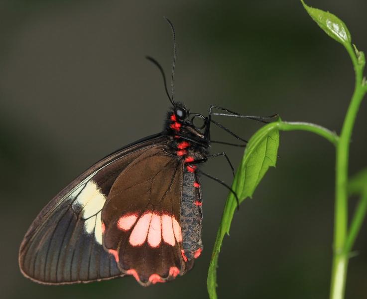Sortie photo aux jardins des Papillons à Grevenmacher (L) 04 AVRIL 2009 - Les photos 211713EOS_40D04_04_20097933COETS__PIERREbelux